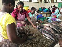 Kisumu-Fish-Market-IMG_4384